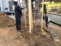 der neue Baum steht :)